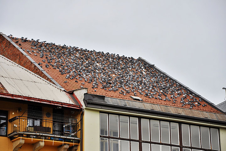 A2B Pest Control are able to install spikes to deter birds from roofs in Camden.