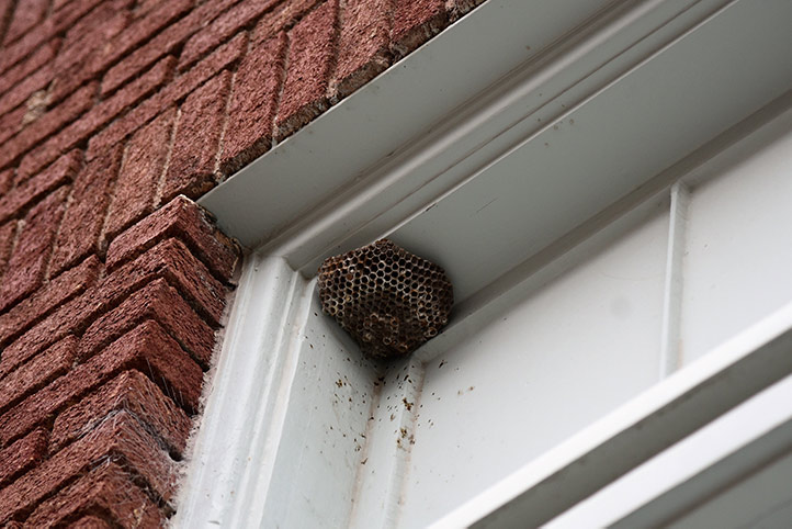 We provide a wasp nest removal service for domestic and commercial properties in Camden.